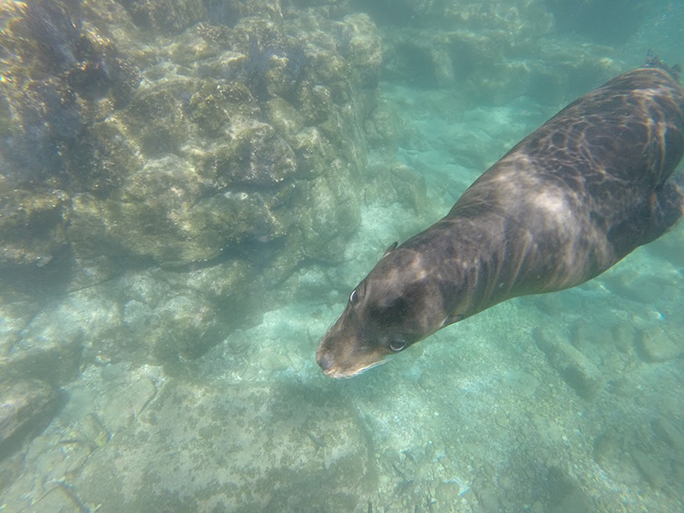 One of our playful snorkel buddies.