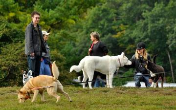 Dogs in a park (AP Images/Heather Ainsworth). image link to story