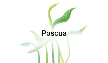 Pascua - Pascua Link to file