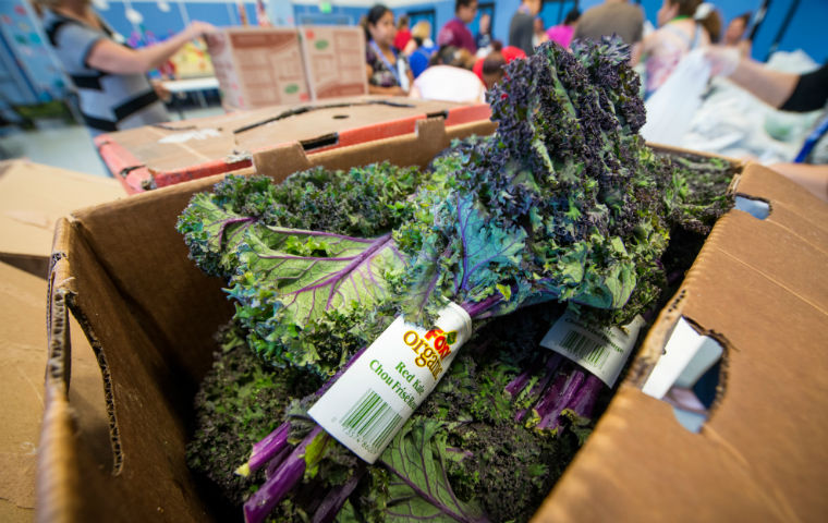 organic kale at a food bank by Second Harvest Silicon Valley
