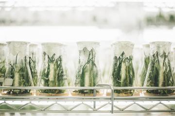 5 plants in experiment glass. Photo by Chuttersnap, Unsplash.