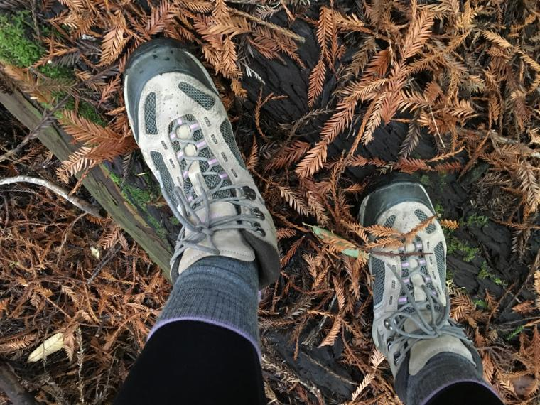 Image of looking down at hiking boots in a forest floor