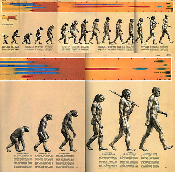 "Zallinger's 1965 drawing, ""The Road to Homo Sapiens"""