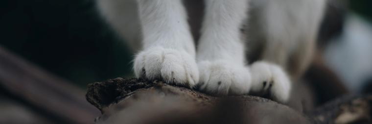 A close up of white cat paws, sitting on a tree branch