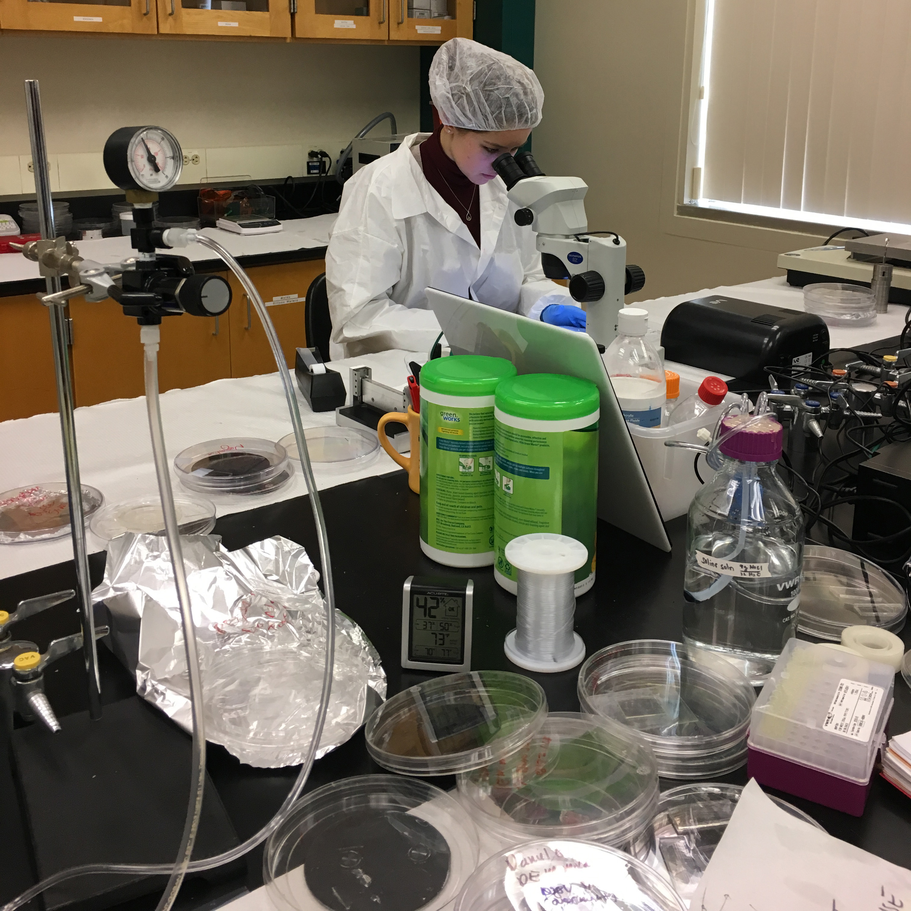 Female student at work in a bioengineering laboratory image link to story