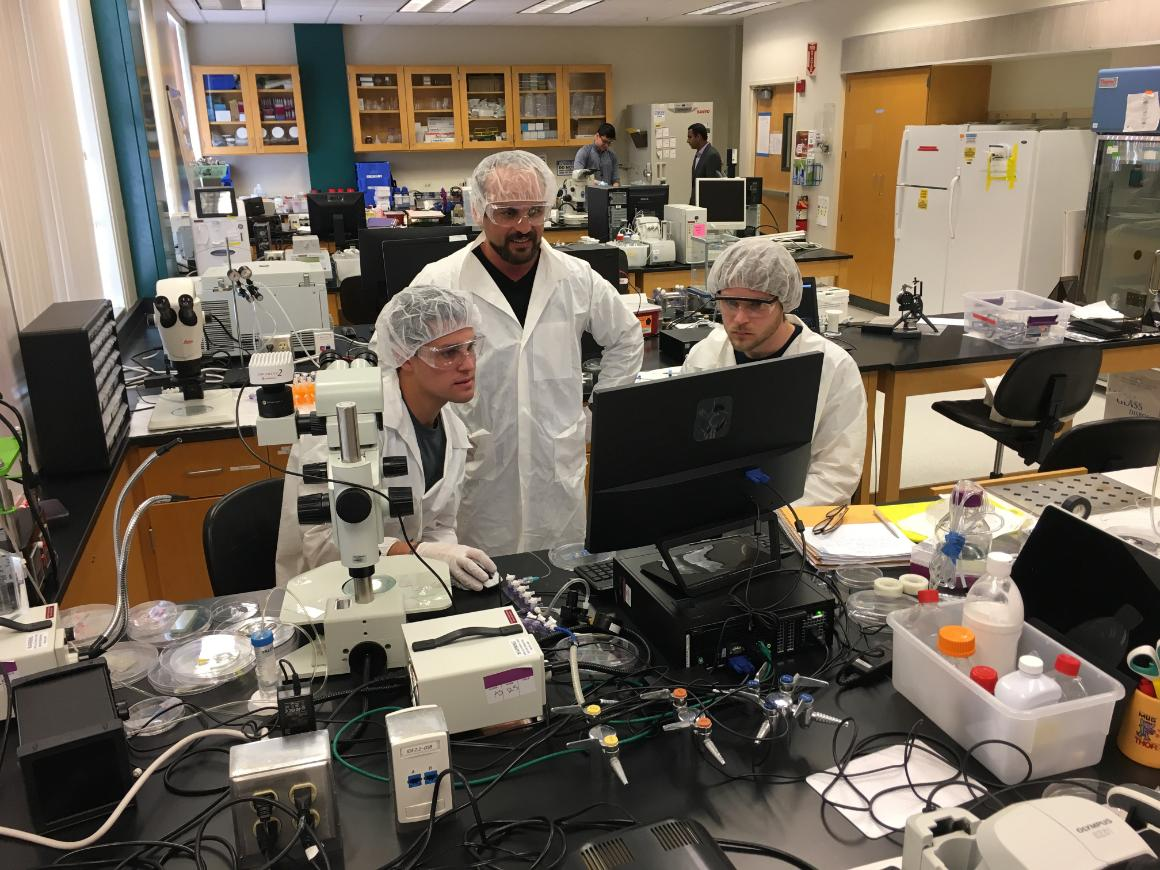 Faculty and students at work in a bioengineering laboratory image link to story